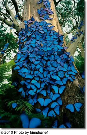 Butterflies on a tree