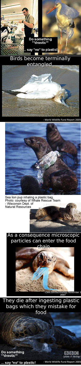 Plastic Grocery Backs - Impact on Wildlife