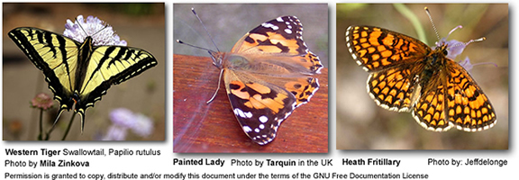 Western Tiger Butterfly, Painted Lady Butterfly, Heath Fritillary Butterfly