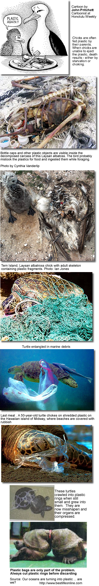 Plastic Pollution in our Oceans and the Victims