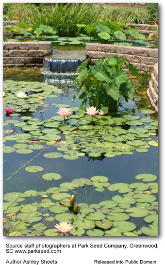 Inviting wildlife to your garden build a pond - Build pond wildlife haven ...
