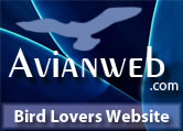 AvianWeb: The Bird Enthusiast's Web